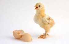 Which Comes First, the Chicken or the Egg?