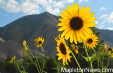 Lessons from Maple Mountain